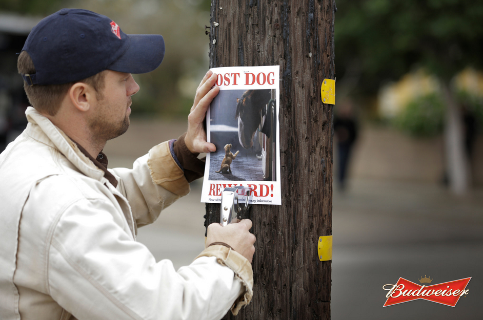 budweiser-lost-dog